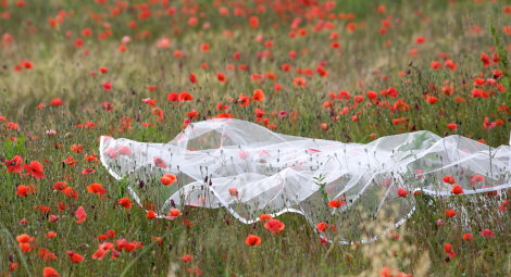 Bridal Veil On  Poppies Field